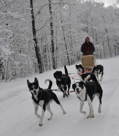 Vermont B&B dogsled advednture package