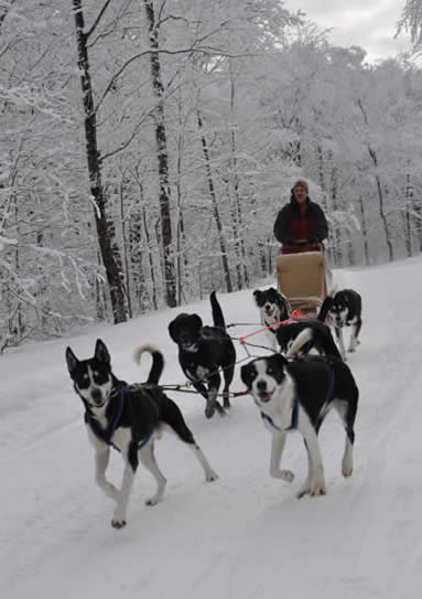 winter or summer camping adventures and dogsled rides in Vermont