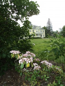 Pink flowers with yellow house in the backgrounmd